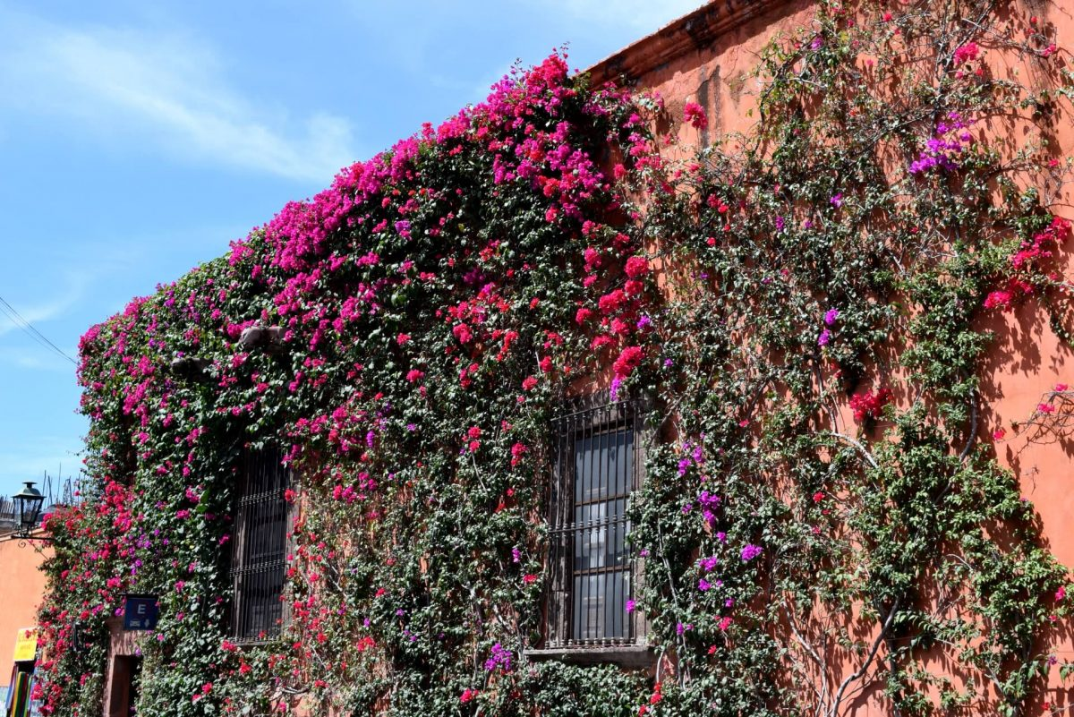 The Ultimate Guide to a Weekend in San Miguel de Allende
