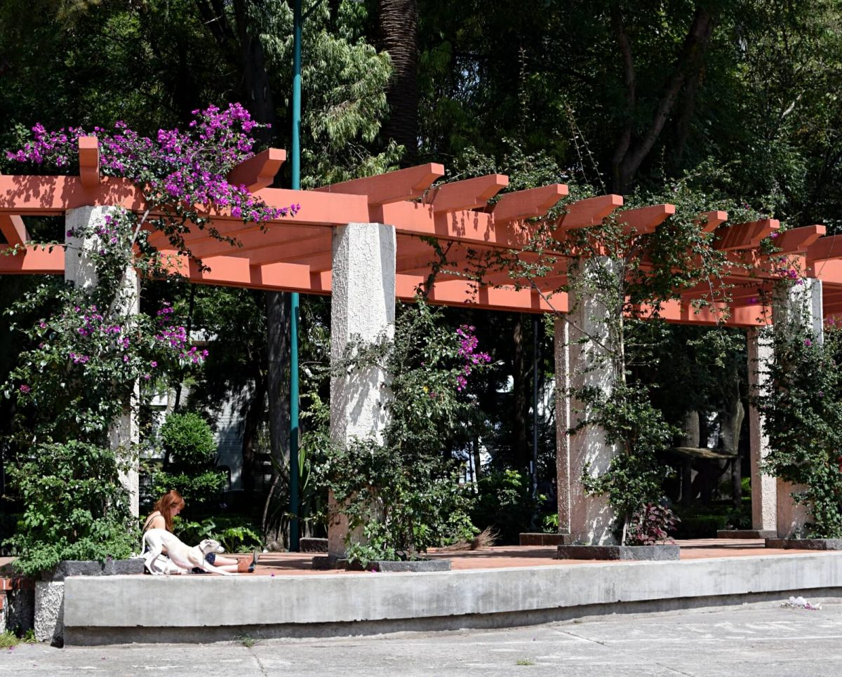 Mexico City Travel: What to do in Condesa