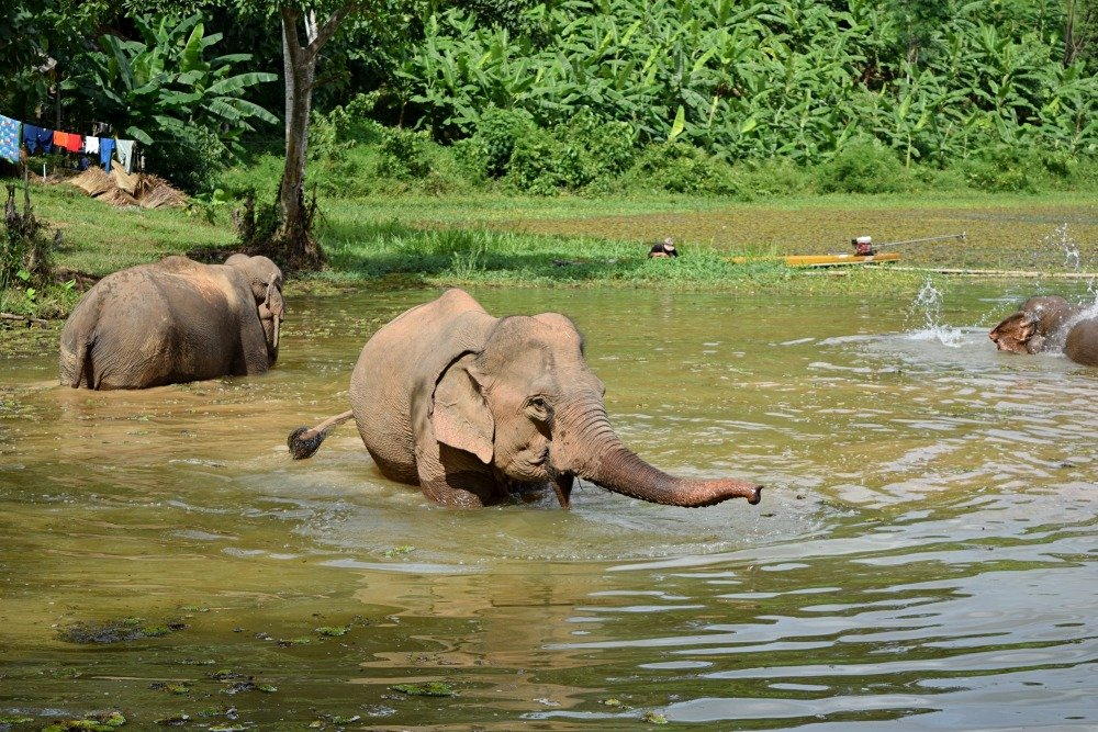 elephants bathing at the ECC