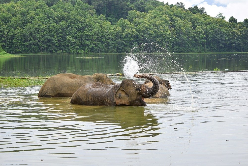 The Experience of a Lifetime at the Elephant Conservation Center in Laos