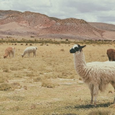 Things to Do in Bolivia: Getting Off the Beaten Path in Tarija