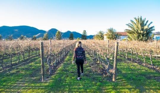 Valle de Guadalupe Wineries: The Best Wineries in Baja California