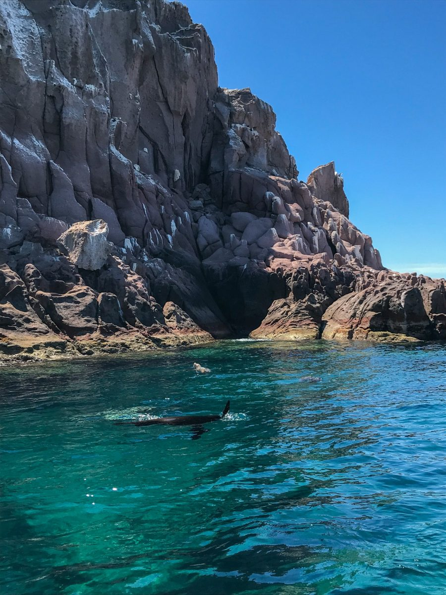 what to do in la paz mexico