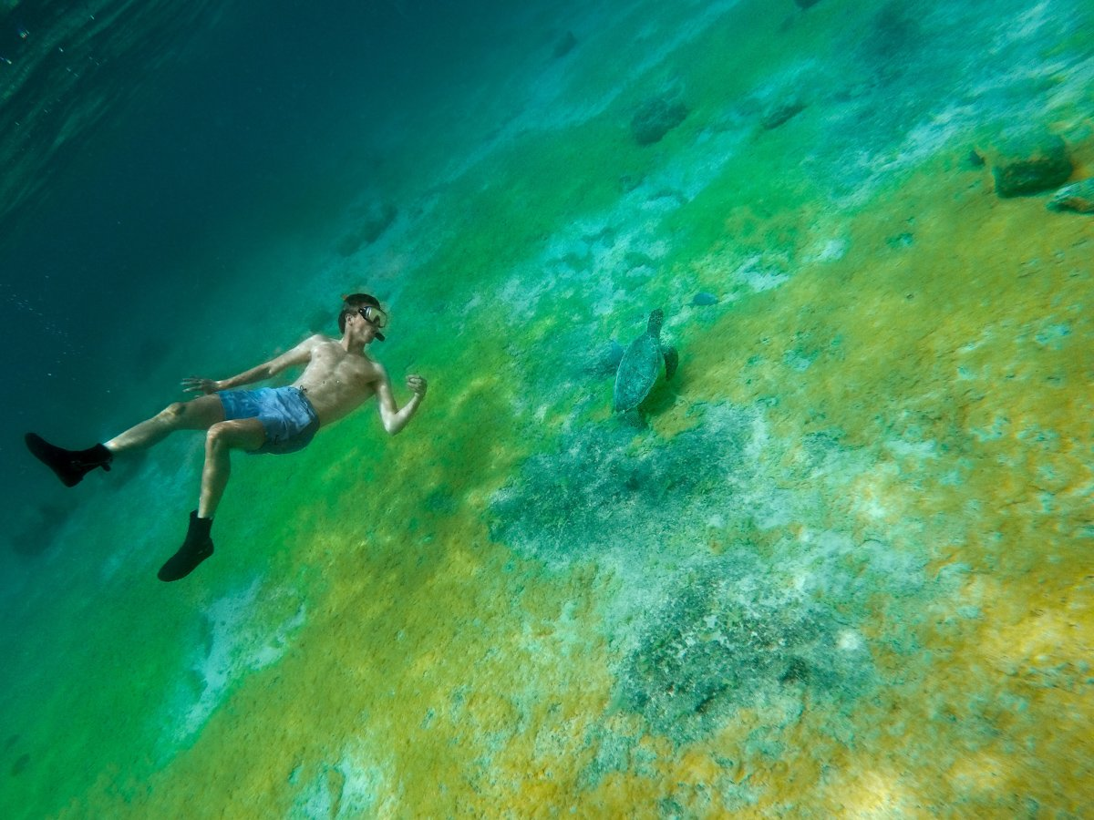 snorkeling is one of the most fun things to do in cancun