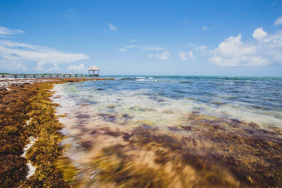 seaweed in Tulum