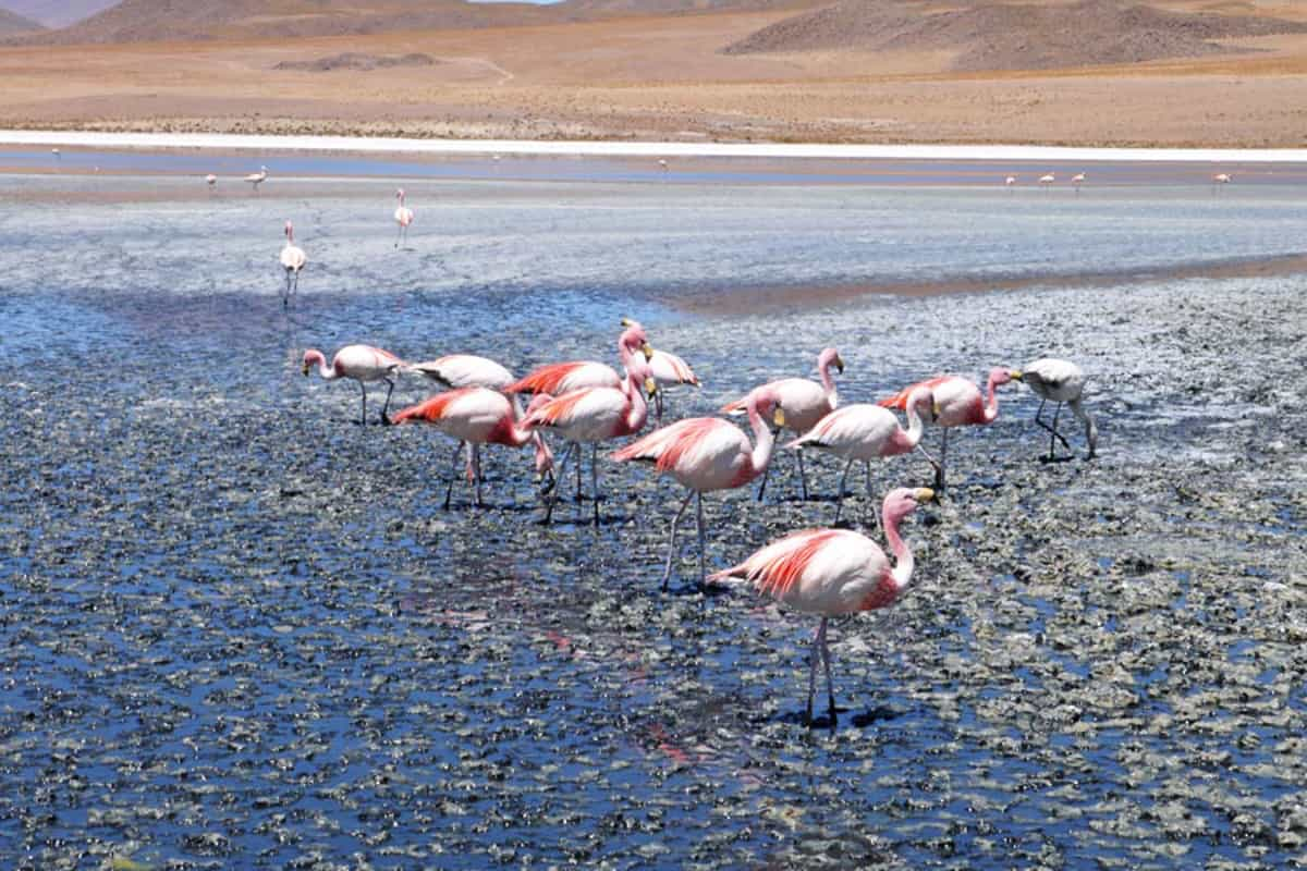 chile itinerary should include flamingos!