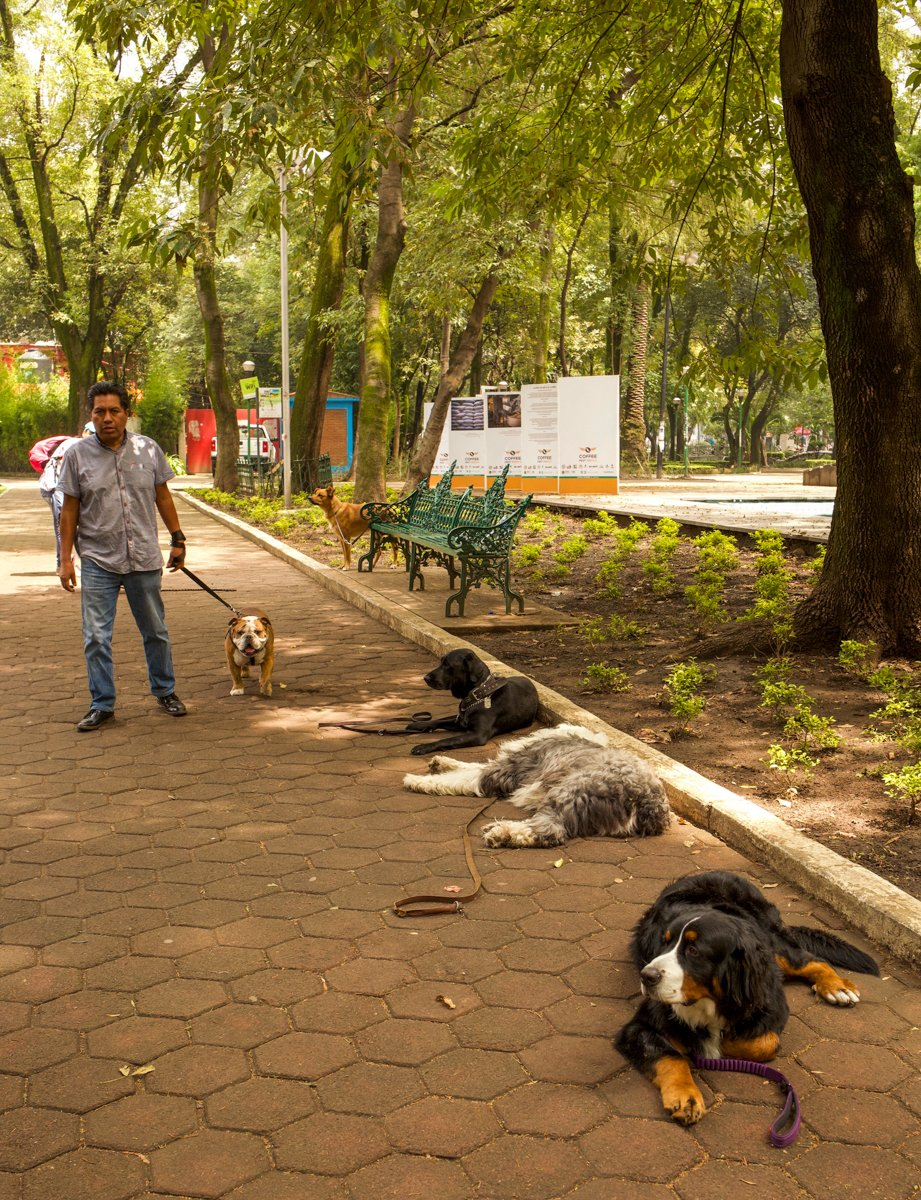 watching the dogs in the park in mexico city