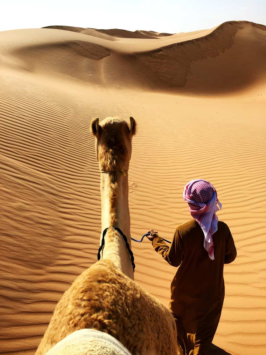 camels in the desert in oman