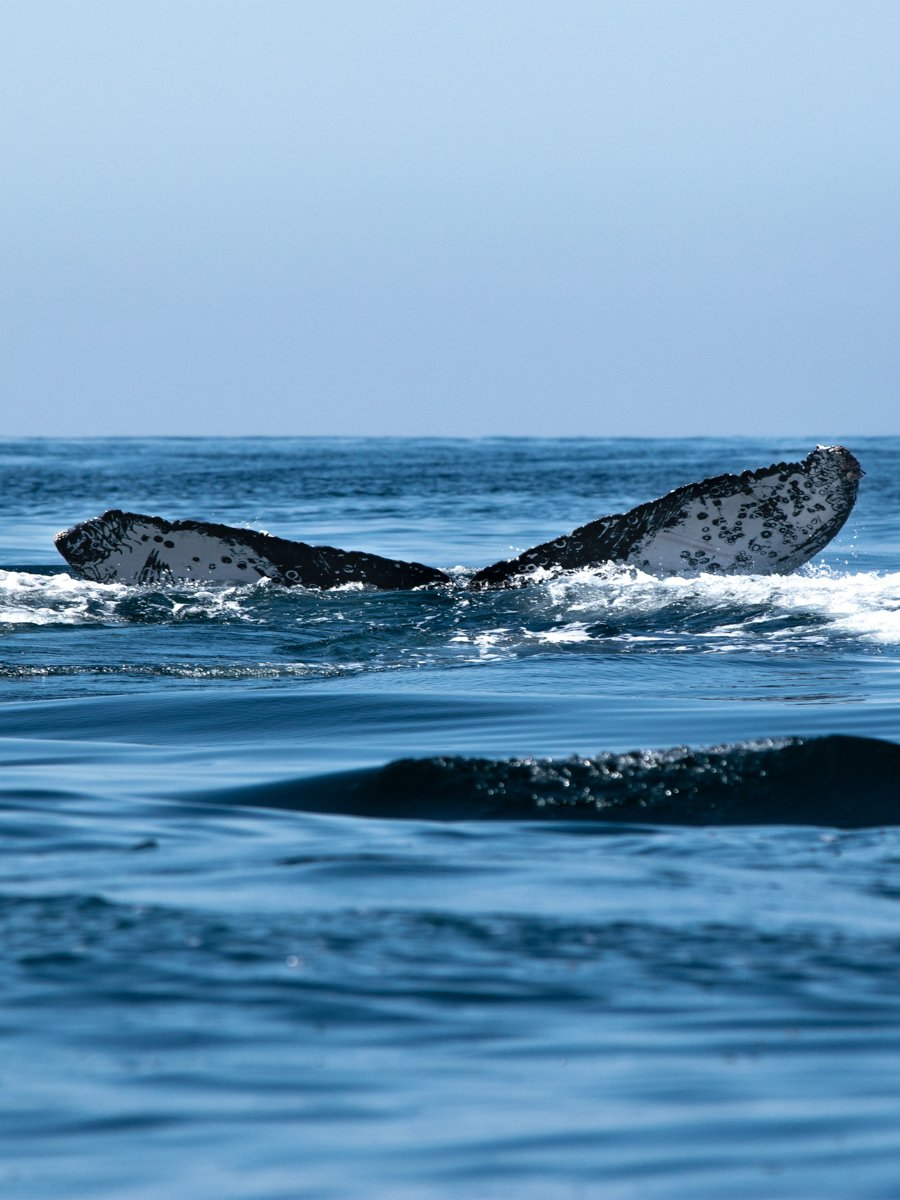 a whale tale seen from a whale watching trip