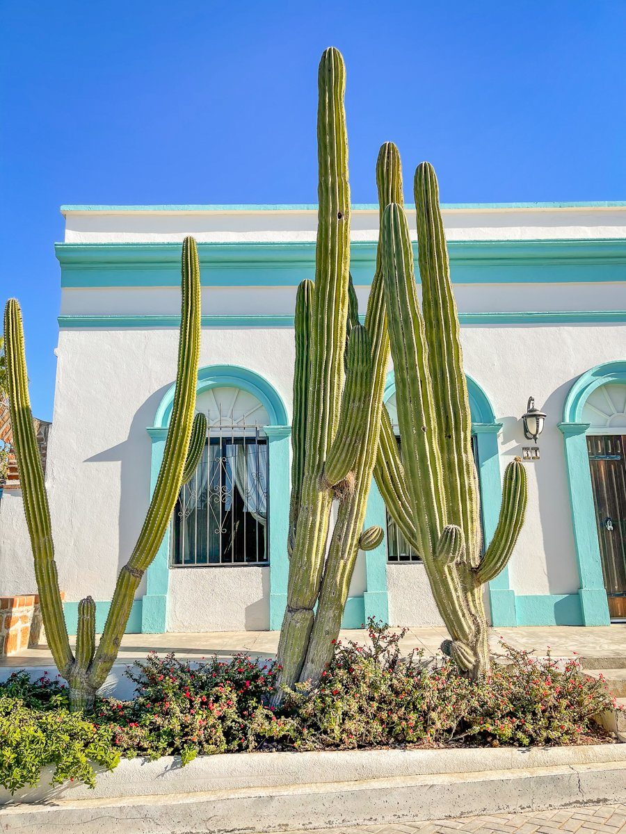 colorful white and green house with cactus in front