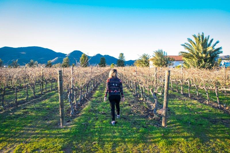 Walking through the vineyards in Valle de Guadalupe Ensenada
