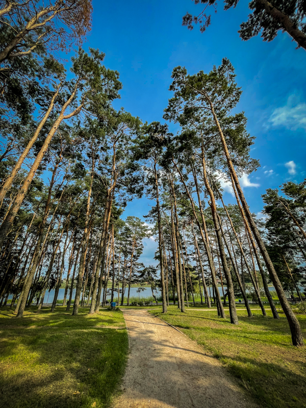 trees near a lake in Lithuania